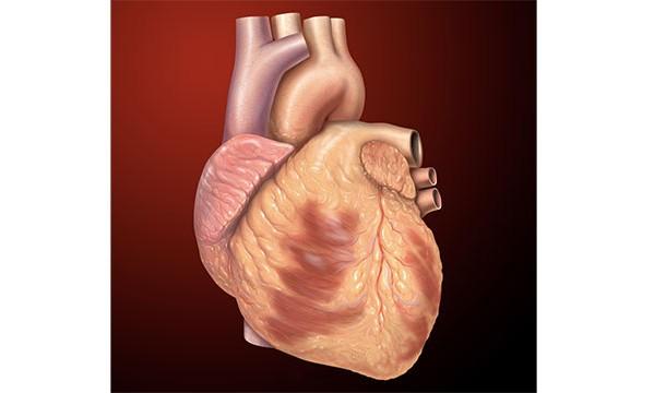 عطسه باعث توقف ضربان قلب شما می شود !