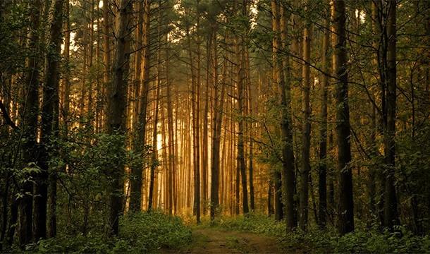 ترس از چوب ، جنگل ها یا درخت ها !