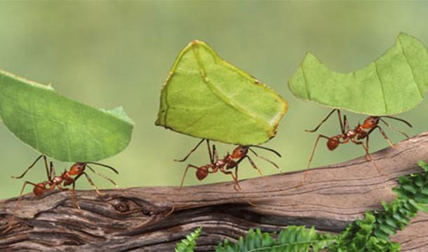 ترس از مورچه !