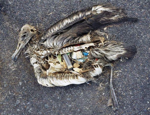 قاره هشتم ، تکه زباله اقیانوس آرام