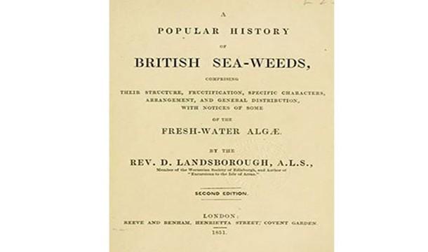 تاریخ مشهور جلبک های دریایی انگلستان !