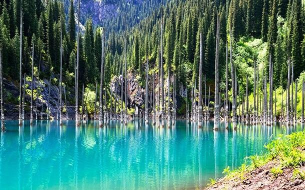 تنه درختان مرده در دریاچه