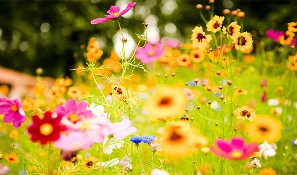 ترس از گل ها !