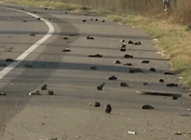 بارش پرنده های مرده از آسمان در آرکانزاس