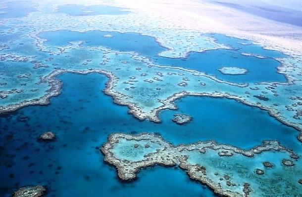 دیواره بزرگ مرجانی