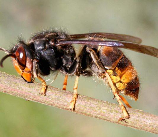 20 مورد از خطرناک ترین حشرات در جهان