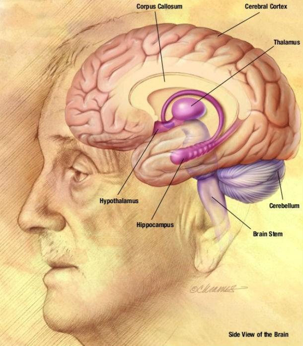 درد در مغز