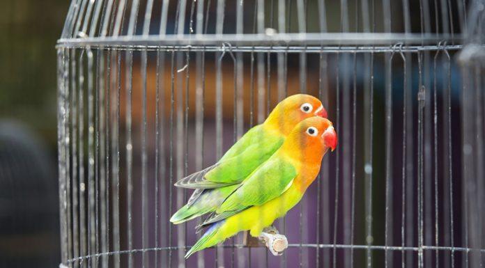 راهنمای خرید قفس پرنده