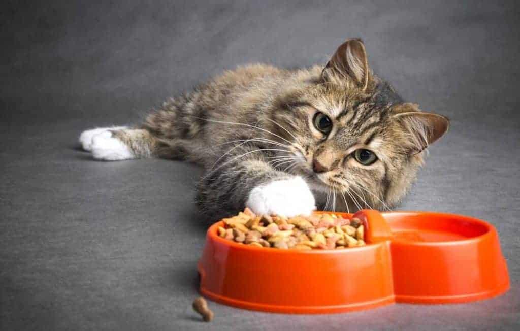خرید غذای خشک گربه