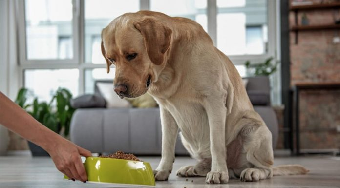 خرید غذای خشک سگ