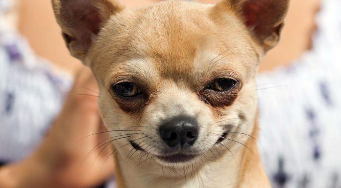 عکسهای خندهدار از حیوانات خانگی و احساساتشان