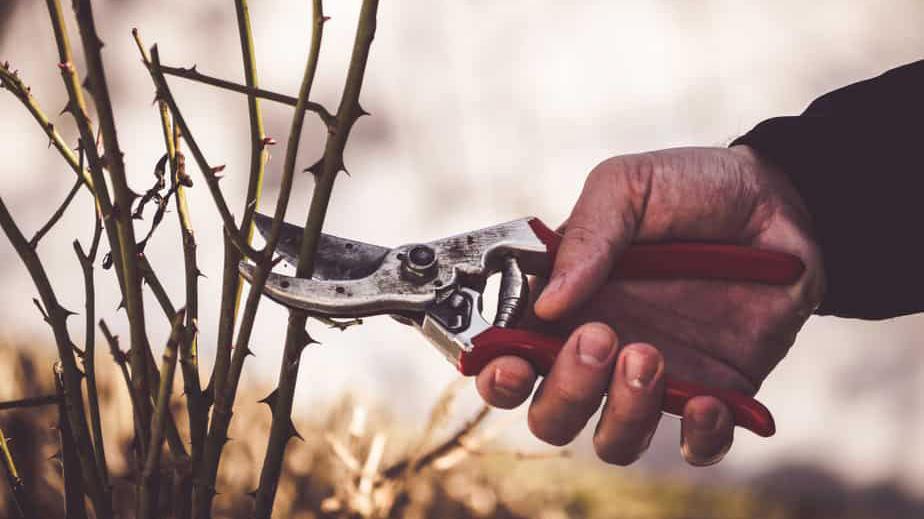 راهنمای خرید قیچی باغبانی