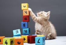 راهنمای خرید اسباب بازی گربه