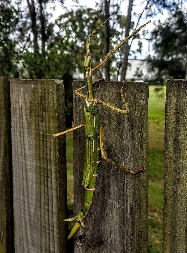 به استرالیا خوش آمدید، جایی که حشرات آن به اندازه یک پستاندار، بزرگ هستند