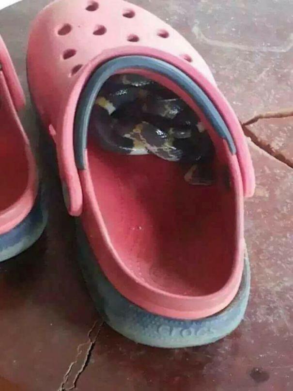 در استرالیا حتما باید قبل از پوشیدن کفشتان داخل آن را بررسی کنید