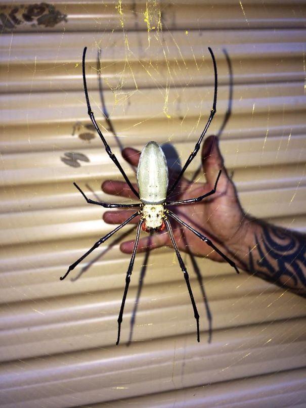 یک عنکبوت ترسناک اما زیبا