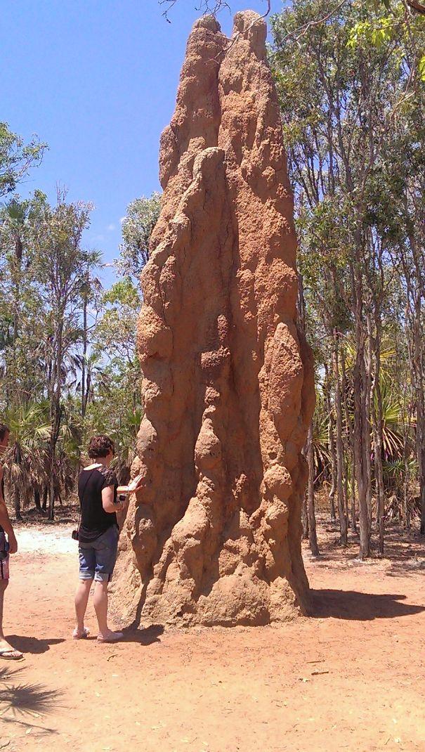 این لانه مورچه عظیمالجثه