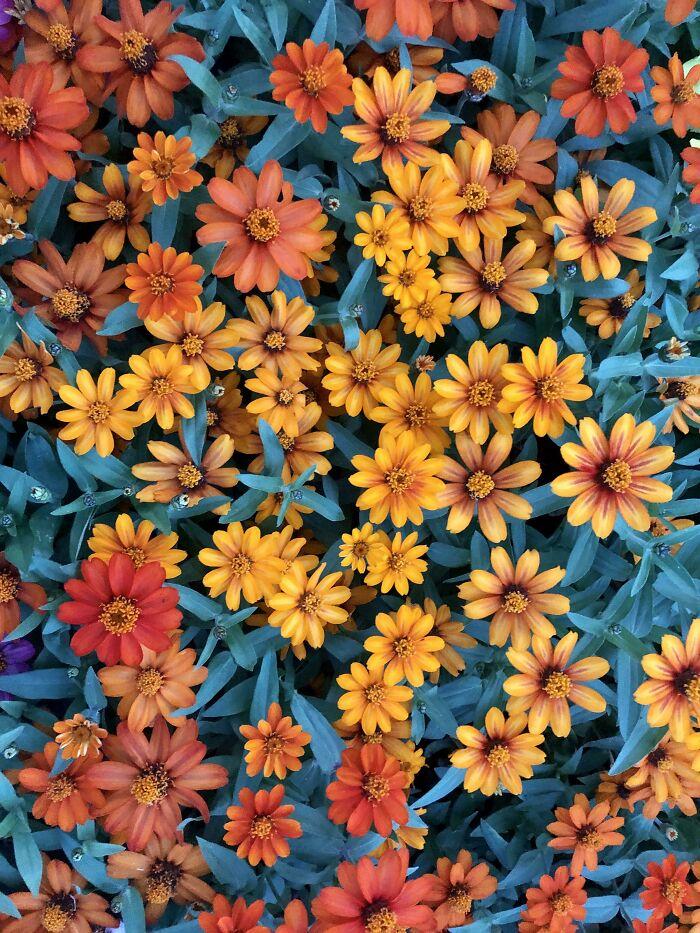 رنگ حذاب این گلها هنگام غروب