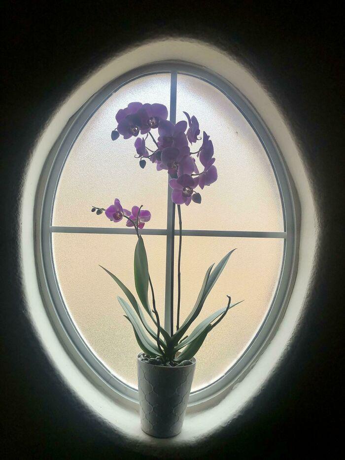جاگیری عالی این گل ارکید پشت پنجره