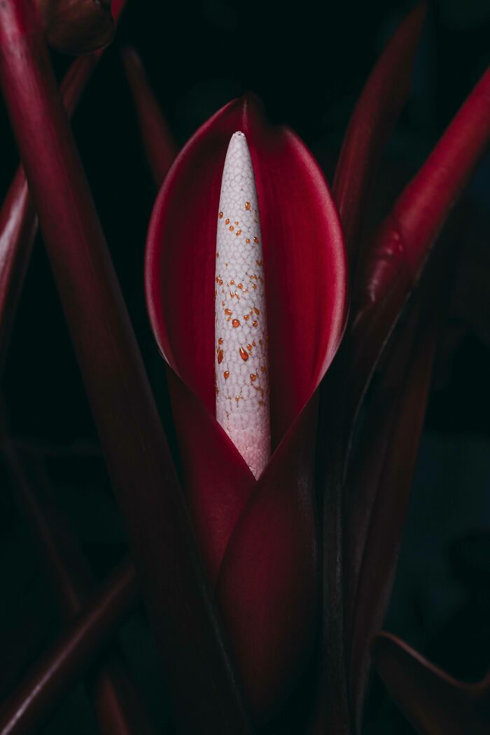 یک گل شیپوری جذاب