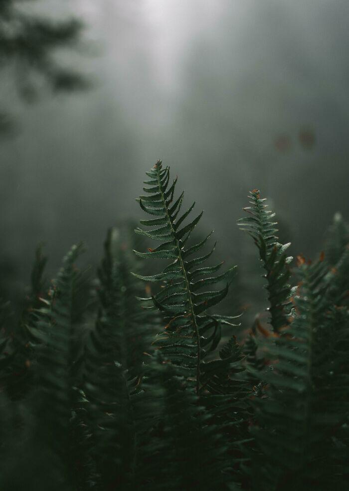 شاخههای زیبای این گیاه