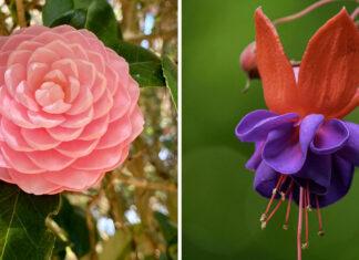 تصاویر فوقالعاده زیبا و دیدنی از گیاهان با توجه به علم گیاهشناسی
