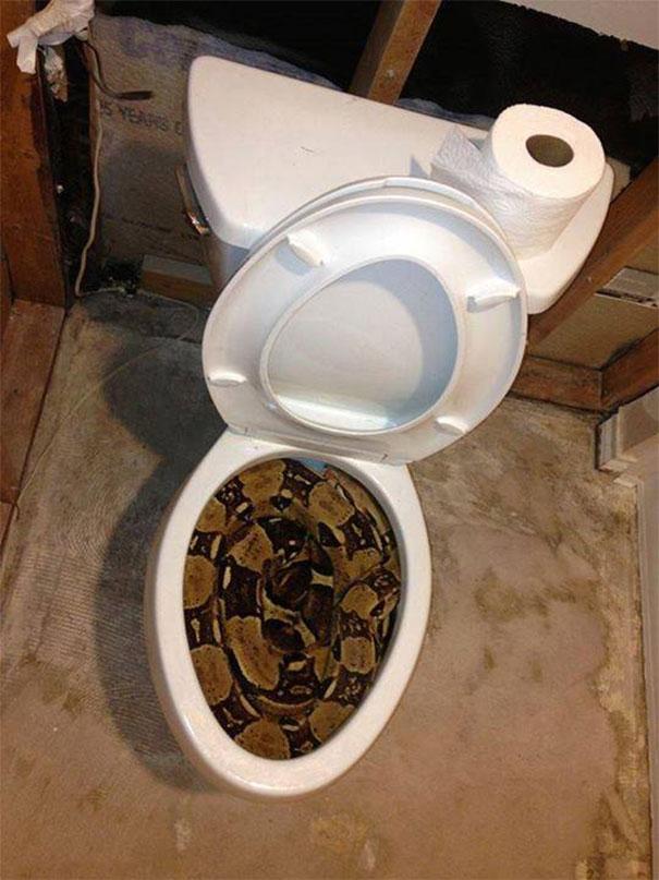 به این دلیل باید در قاره استرالیا حتما توالت خود را بررسی کنید
