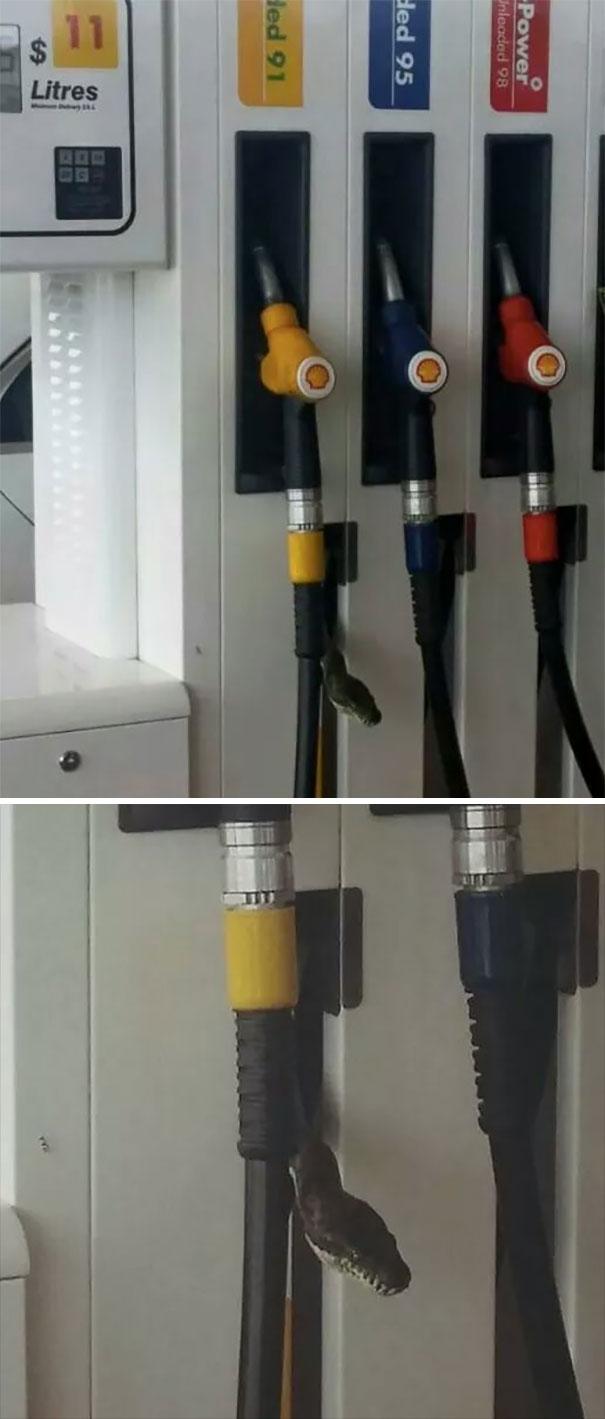 پمپ بنزینهای استرالیا