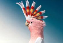 تصاویر پرتره زیبا از پرندگان در خطر انقراض