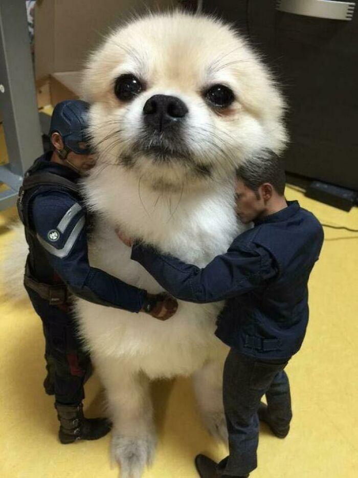 کاپیتان آمریکا و سگش!