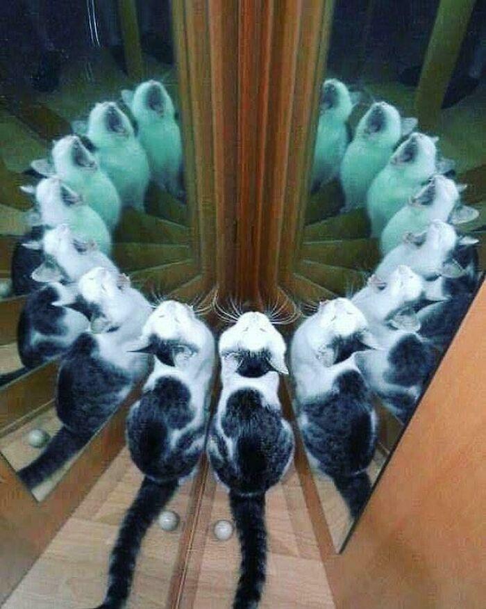سمفنوی گربه ها!