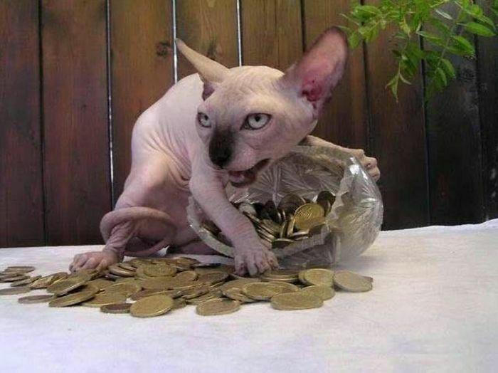 جرئت داری بیا سمت سکه هام!
