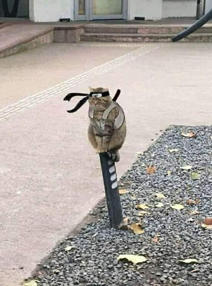 نینجا گربه!