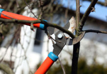 راهنمای خرید قیچی شاخه زن