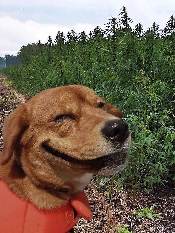 به چی پوزخند می زنه!