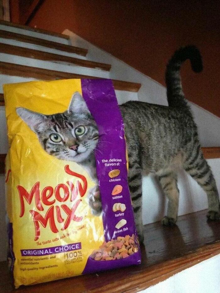تطبیق جالب این گربه با گربه روی بسته بندی!