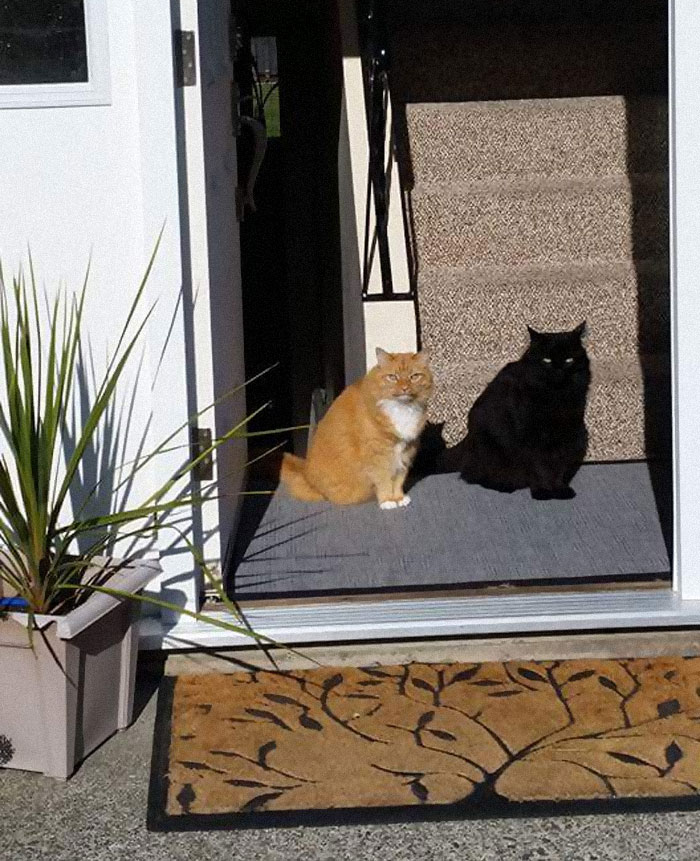 سایه نیست، یک گربه سیاهه!