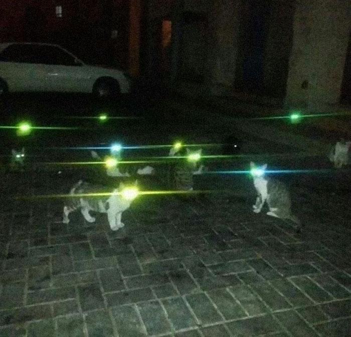 گربه های سوپر من!