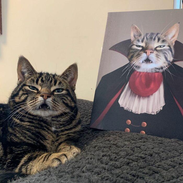 یک گربه دراکولا!