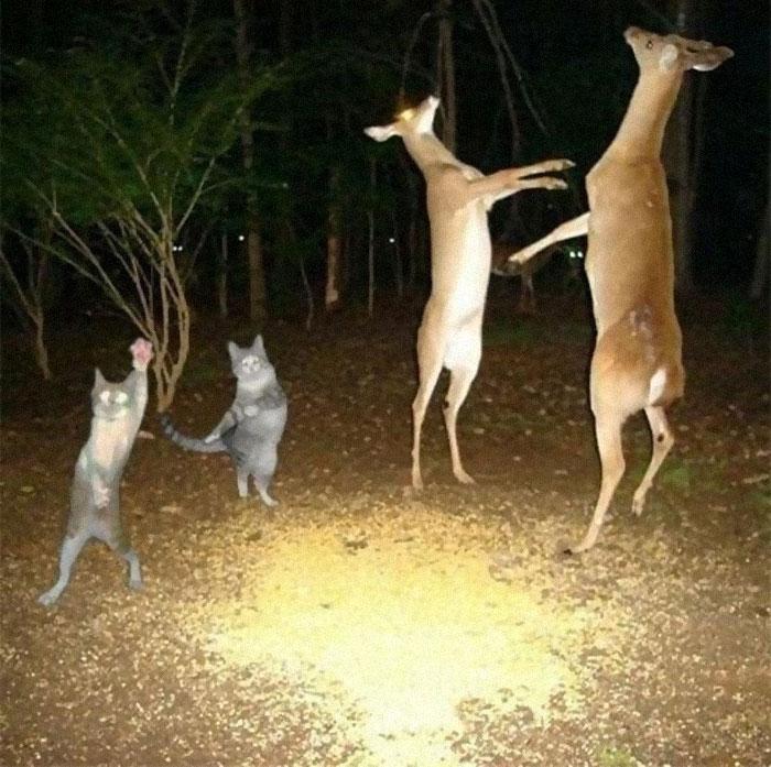 پارتی شبانه حیوانات!