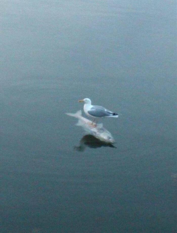 مرغ ماهی سوار!