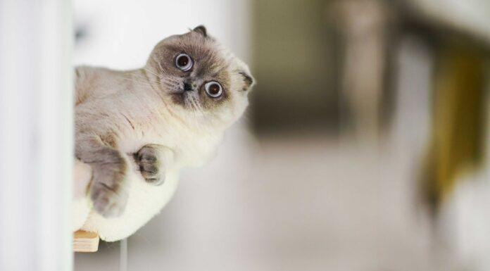 تصاویر عجیب و غیرقابل توضیح از حیوانات مختلف!