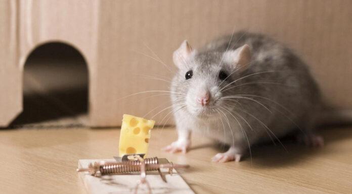 راهنمای خرید تله موش